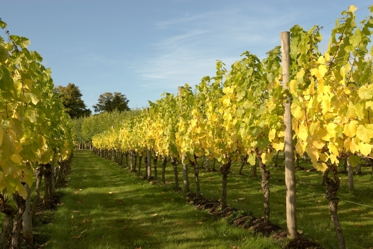 Danebury Vineyards website.jpg