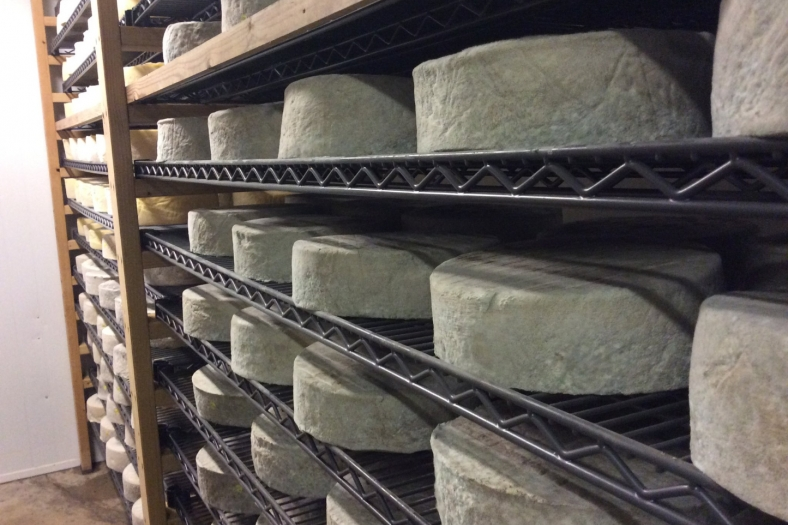 Stoney Cross by Lyburn Farmhouse Cheeses